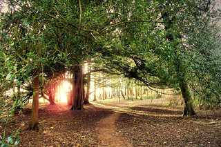 Last Light in the Woods at Conishead Priory | by Silver*Rose