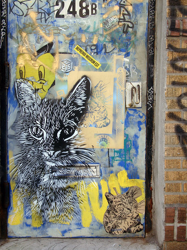 C215 - Kitty Love | by i_follow
