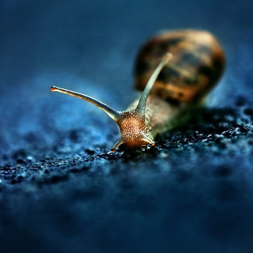 slow down | by aftab.