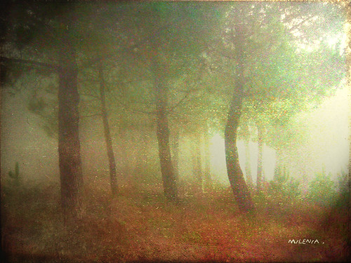 La magia de los bosques ...   The magic of forest ... | by tan.solo_milenia .