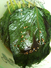 Michelle's perilla leaf pickles | by maangchi