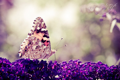~What the caterpillar calls the end of the world, the master calls a butterfly~ | by Pink Pixel Photography (f.k.a. Sunny)