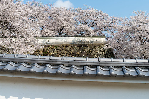 龍野城の桜 2