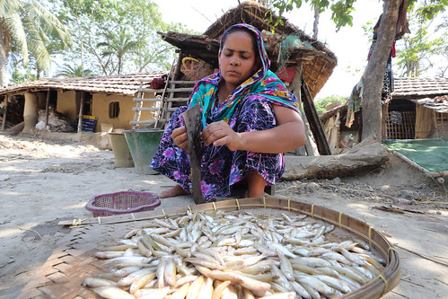 A woman cleaning fish at her house in Jessore, Bangladesh. Photo by M. Yousuf Tushar