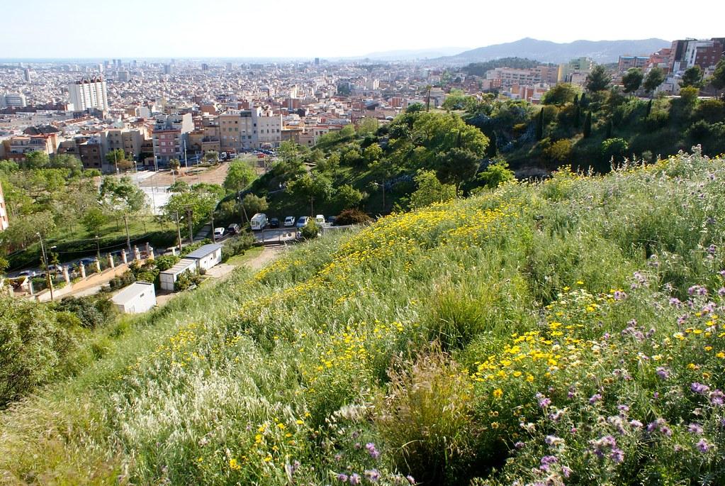 Champs de fleurs sauvages à flanc de la colline du Guinardo à Barcelone.