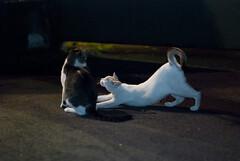 Sembawang Park Cats - 01