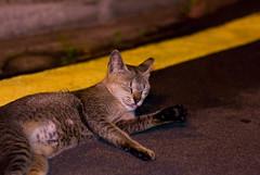 Sembawang Park Cats - 04