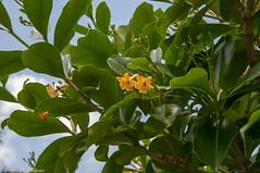 Kauai98.jpg