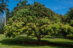 Kauai81.jpg