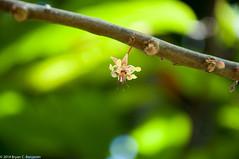 Kauai84.jpg