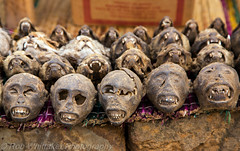 Monkey Skulls Togo Voodoo