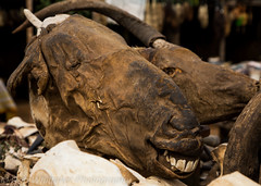 Smiling Horse Head Togo Voodoo