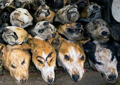Dog Heads Togo Voodoo
