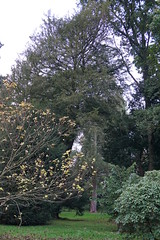 Westonbirt National Aboretum