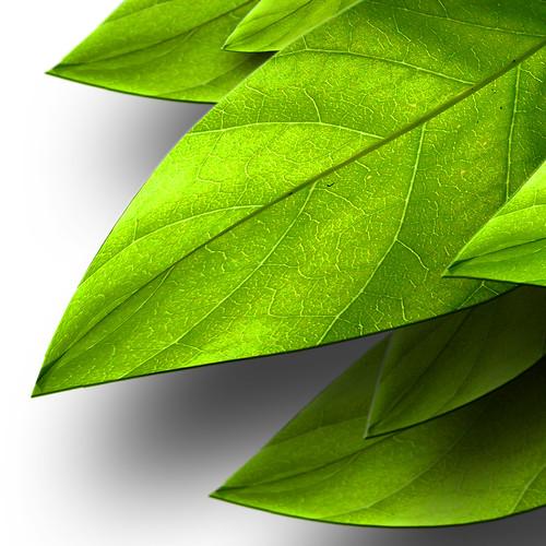 3d-leaves | Warp Tool ...