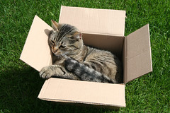 Cat in a Box | by Peter Huys