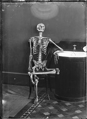Portrait of an articulated skeleton on a bentwood chair by Powerhouse Museum Collection