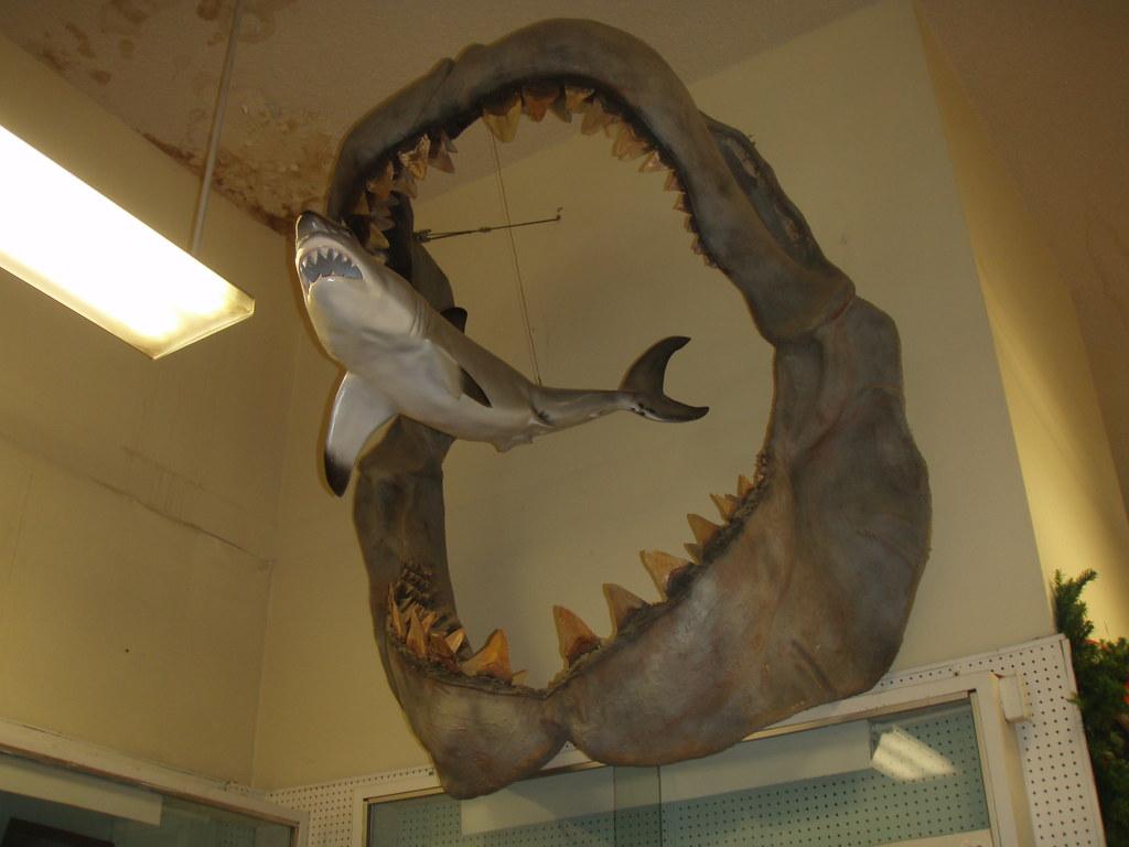 great white shark vs megalodon