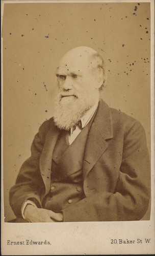 Portrait of Charles Robert Darwin (1809-1882), Biologist | by Smithsonian Institution