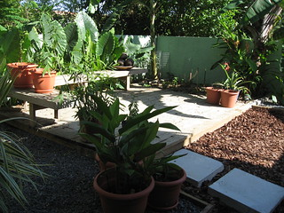 Palmetto Guesthouse Backyard | by palmettoculebra