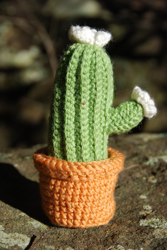 Free Crochet Pattern For Cactus : How to crochet a cactus Flickr - Photo Sharing!