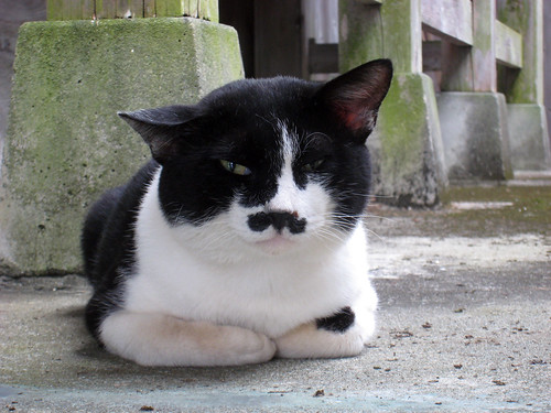 A cat with a Charlie Chaplain mustache at the Shinto shrine | by JoshBerglund19
