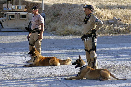 Iraqi Police train working dogs in explosives and narcotics detection | by The U.S. Army
