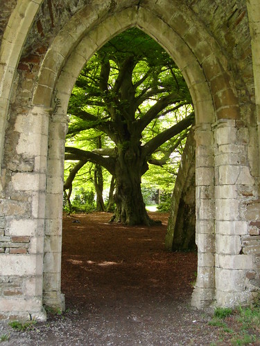 Arch and a Tree | by princess5exyface
