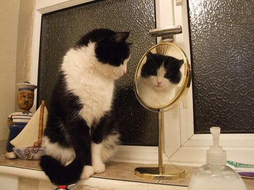 Cat in mirror | by Toffycrackle