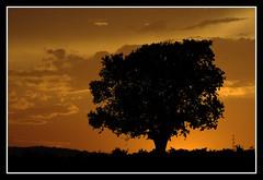 Falsa silueta // Fake Silhouette by ~Oryctes~