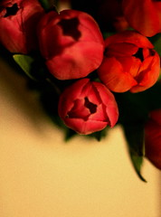 Bunch of tulips by Mohammadali