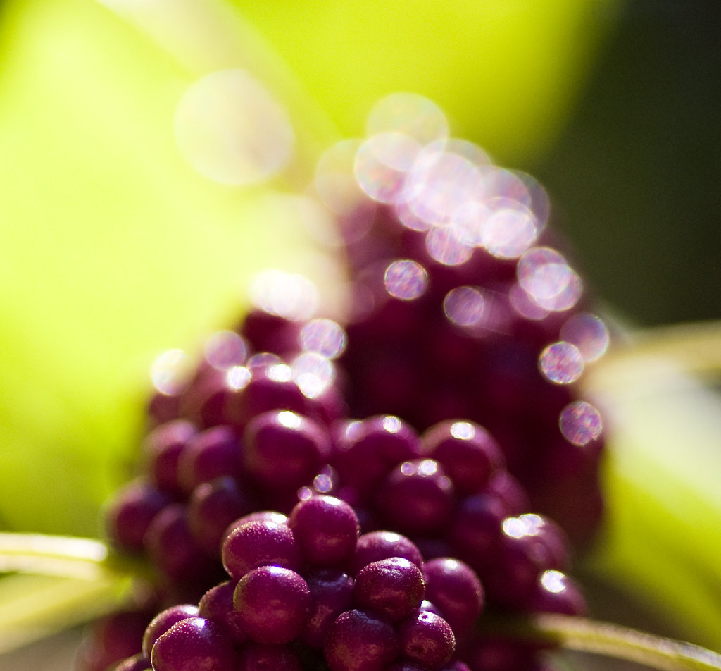 Japanese Bokeh Berries