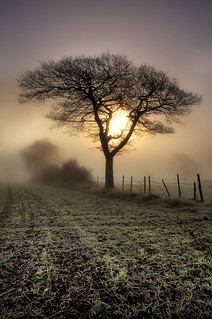 Tree | by Chris Charlesworth