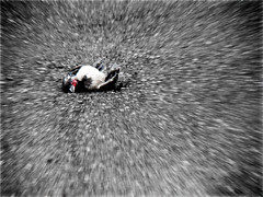 & . . . The End - ( Dead Crow ) by Mehrad.HM