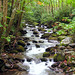 Roaring Fork Creek, Gatlinburg, TN