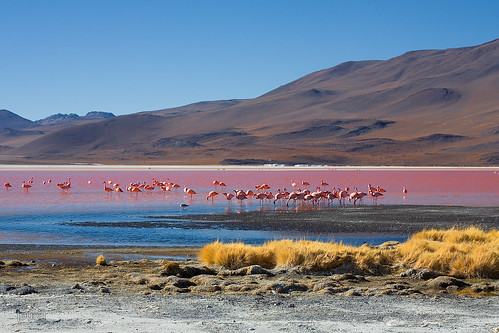 Laguna colorada - Bolivia | by Auré from Paris