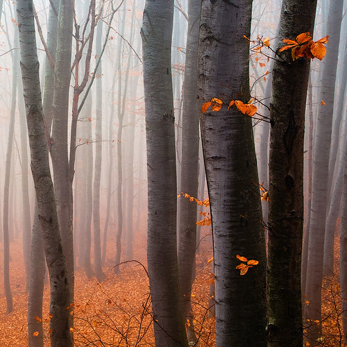 Red wood | by Evgeni Dinev