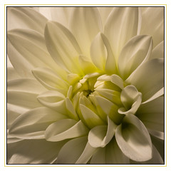 White beauty 2 by Jacquelien Spikker