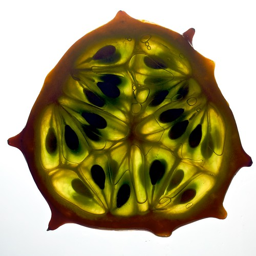 Horned Melon Cross Section | by Samer Farha
