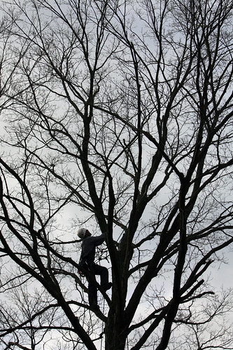 USDA inspects trees in Worcester, MA, for signs of the Asian Longhorned Beetle | by WNPR - Connecticut Public Radio