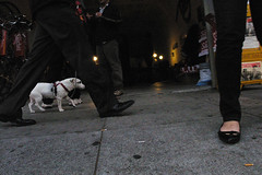 Street level with the dogs | by juicyrai