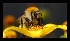 Mister BEE by ACIDIRK