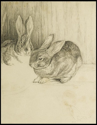 Two Bunnies | by peacay