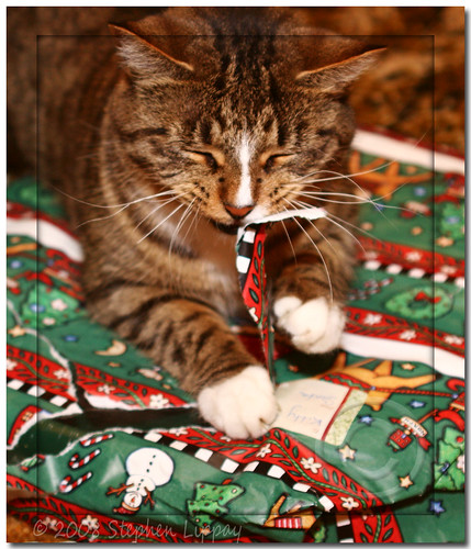 Cats love Christmas too | by slippay