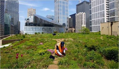 "Chicago Adapts For a Warmer, Wetter Future:  ""Green"" Roof on City Hall ... 
