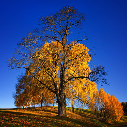 Autumn Leaves | by Krogen