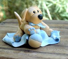 Golden Puppy side by Sugarbloom Bev