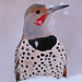 Northern Flicker (Red-Shafted Male) Snowy Face1