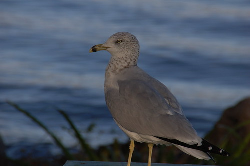 gull | by saird