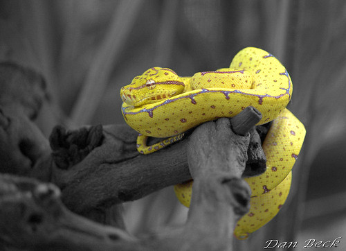Chondro Selective Color | by kondro86